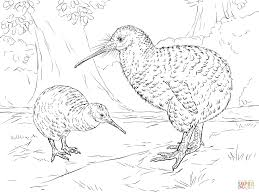 Small Picture Great Spotted Kiwi coloring page Free Printable Coloring Pages