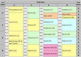 Amino Acid Chart Delectable Amino Acid Chart Single Letter Code Heartimpulsarco