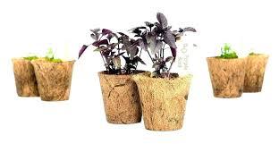 home depot herbs garden herb garden starter kit home depot herb plants home depot herb garden