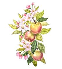 colorful watercolor of the apple tree