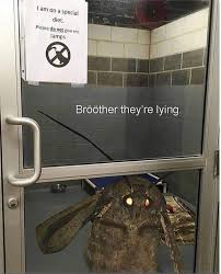The Best Moth Memes To Fly Around Into Repeatedly Like A Maniac