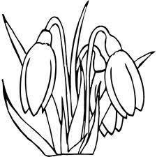 Krokus Embroidery Drawings Coloring Sheets En Flowers