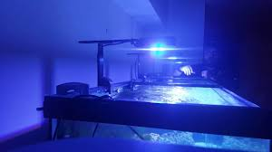 Prime Hd Light Lighting The 125 Gallon Sumpless Reef Tank 3 Ai Prime Hds