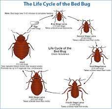 bed bug removal 2