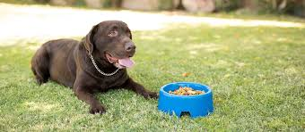 The Best <b>Senior Dog Food</b> (Review) in 2020 | My Pet Needs That