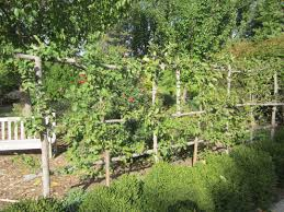 Fruit And Nut Trees In Washington  Garden GuidesFruit And Nut Trees