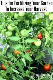 Vegetable Garden Fertilizer Chart Vegetable Garden Fertilizer 10 10 10 Keenaninterior Co
