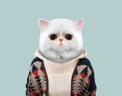 zoo animals in clothes. Exellent Animals 19 Exotic Shorthair Cat In Zoo Animals Clothes N