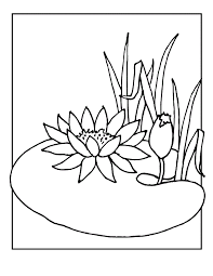 Small Picture Lily Pads Coloring Pages Coloring Home