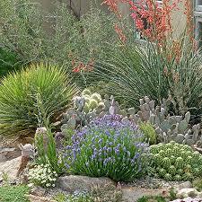 desert plants flowers.  Desert Desert Landscaping Plants  Drought Tolerant High Country Gardens For Flowers P