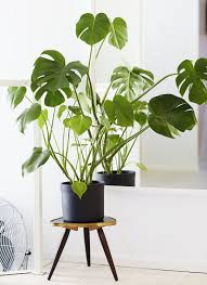 cool office plants. 12 Best Plants For The Office - Punched Clocks Cool S