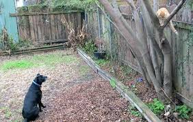 creating a pet safe garden guide to toxic and non plants epic gardening mulch home depot
