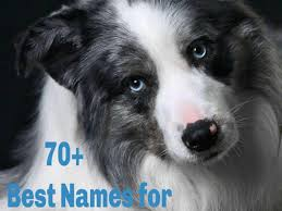 names for dogs with blue eyes
