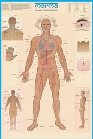 Marma Chart Breathing In This Life Support For Mothers Living Fit