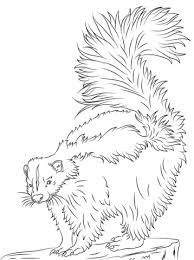 Small Picture Skunk coloring pages Free Coloring Pages