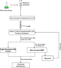 Tissue Culture Flow Chart 1 Showing The Flow Chart Of Production Of Secondary