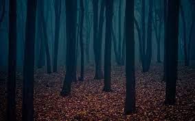 Dark Forest Desktop Wallpapers - Top ...