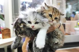 pictures of cute kittens 501322116