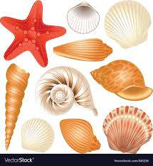 sea shells collection seashells collection royalty free vector image
