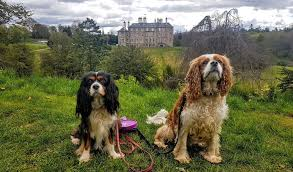 boatswain dog. dalkeith country park is very dog friendly. image by happy home boarding. boatswain r