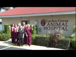 garden grove pet hospital. Garden Grove Pet Hospital M