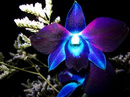 blue flower and orchid image