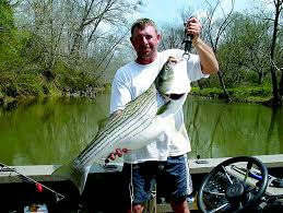 Best striped bass bait coosa river