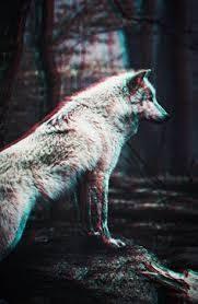 wolf wallpaper iphone 6. Wonderful Wallpaper Resultado De Imagen Para Wallpaper Iphone 6 Hipster To Wolf Wallpaper Iphone R