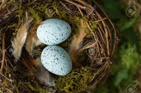 Small Light Blue Speckled Eggs Blue Speckled Eggs Lying In A Birds Nest