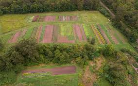 Kitchen Garden Farm About Us Organic Body Lotion Herbal Tea Arnica Cream Lemon