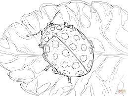 22 Stippen Lieveheersbeestje Kleurplaat Gratis Kleurplaten Printen