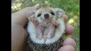 really cute baby animals pictures. Cute Baby Animals Pictures On Really YouTube