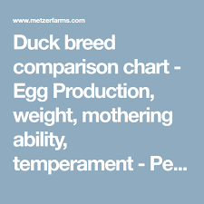 Duck Breed Comparison Chart Egg Production Weight