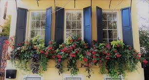Best flowers box garden purple ideas #garden #flowers. The Best Cascading Flowers For Window Boxes Hooks Lattice Blog