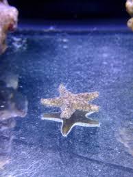 Il mio acquario marino