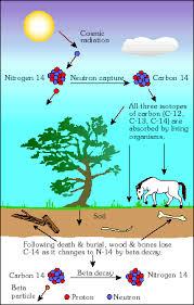 Radioactive dating Earth Science Australia