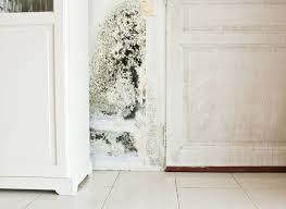 how to get rid of mold and mildew in the mustiest corners of your house