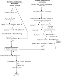 Coagulation Cessation Of Bleeding Chemistry Learning