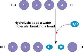 Image result for hydrolysis reaction