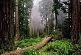 Sierra Álamos – Río Cuchujaqui (Area protegida) Images?q=tbn:ANd9GcQfGx2eQBVeSmVau8N9XrI3tzIQKUGbPPzq5_5qEBnsSojymDmN