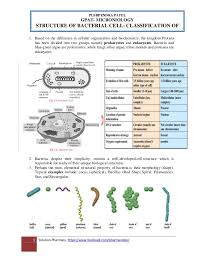 Bacteria Classification Bacteria Cell Classification