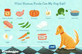 15 human foods dogs can eat and 6 they