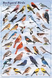 Best 25 Bird Identification Ideas On Pinterest  Bird Watching Backyard Bird Watch