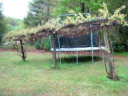 So I want to build a grape trellis.