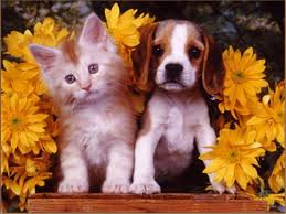 cute kittens and puppies together. Fine Cute Wallpapers For U003e Cute Puppy And Kitten Kittens Puppies Together V