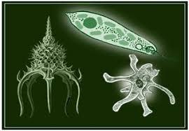 Конспект урока по биологии на тему Многообразие простейших  Конспект урока по биологии на тему Многообразие простейших Паразитические простейшие