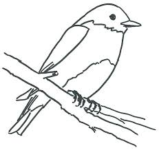 line drawing pics 1 700x661 blue bird coloring page pics photos blue bird angry birds coloring