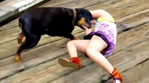 rottweiler dog attacks. ultimate funny dog videos 2015 | rottweilers attack gta 5 animal \u2013 the blog box rottweiler attacks o
