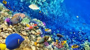 colorful coral reef wallpaper. In Colorful Coral Reef Wallpaper