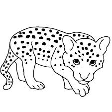 Leopard Coloring Pages For Download Jokingartcom Leopard Coloring